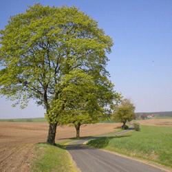 Reimershagen, Weg von der L 11 nach Groß Breesen